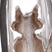 Petitmemo Cat Silver925